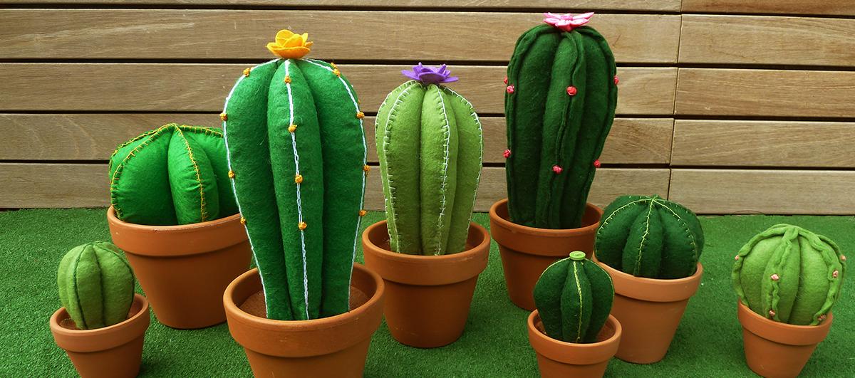 cactus feltre